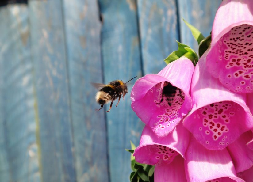 bee-venom-organic-boosting