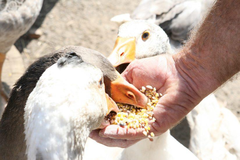 family farm feed