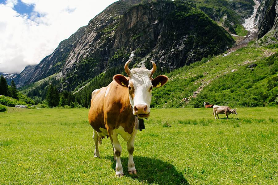 meat-ecologic